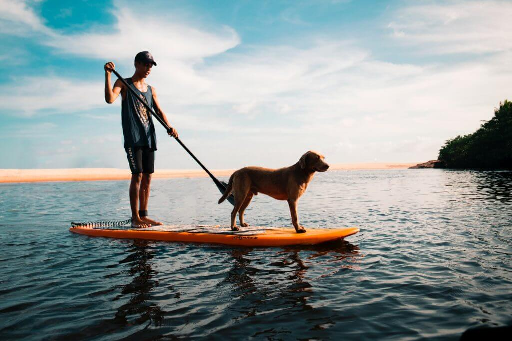 guy on a hard sup paddling with his dog